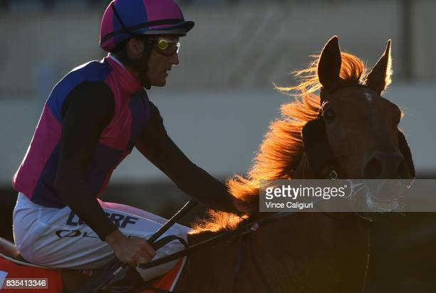 Damien Oliver riding Vega Magic after winning Race 8 Regal Roller Stakes during Melbourne Racing at Caulfield Racecourse on August 19 2017 in...
