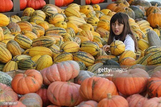 Pumpkin Season - SFGate
