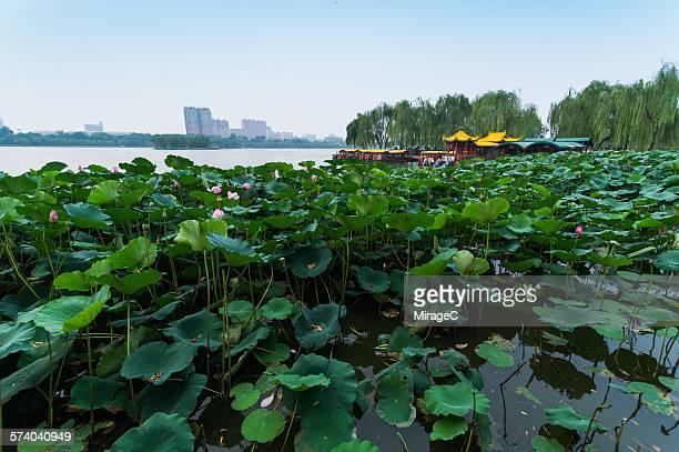 Daming Lake Park in Jinan