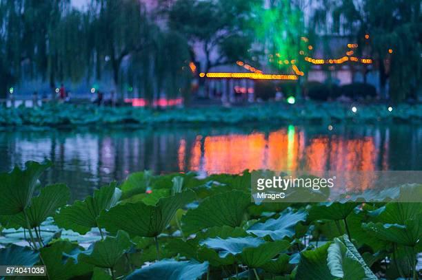 Daming lake park night scener