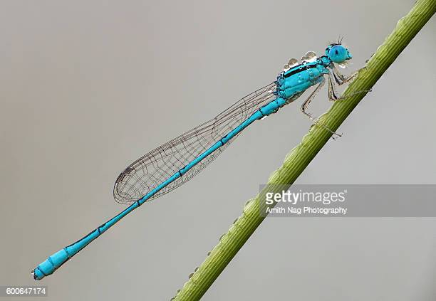 Damselfly Delight