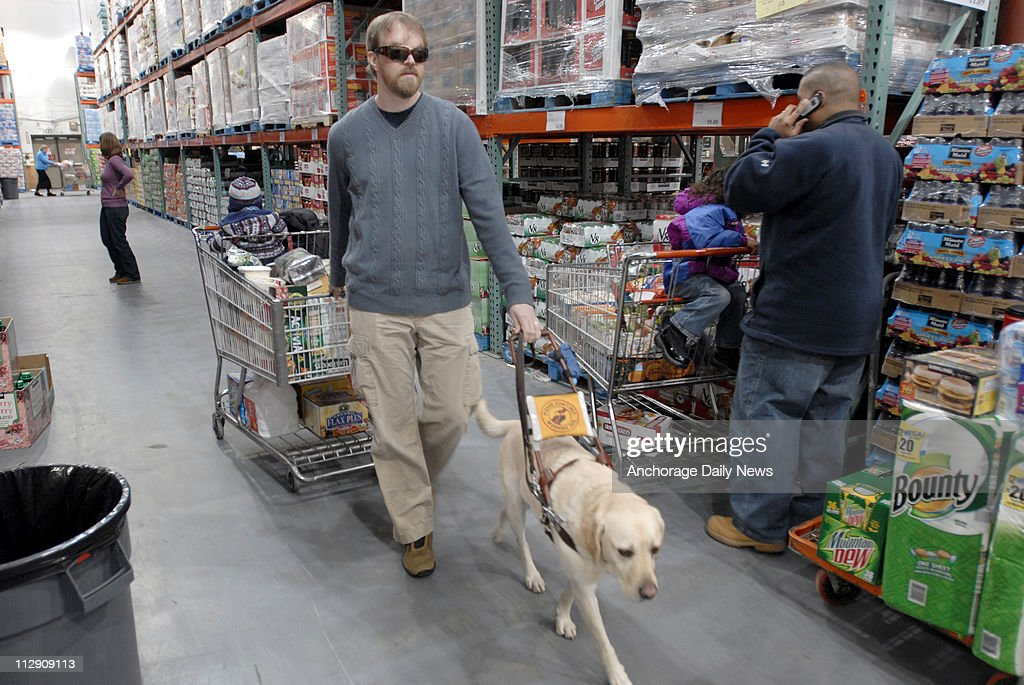 dan bigley is guided by his service dog anderson while shopping at costco in anchorage
