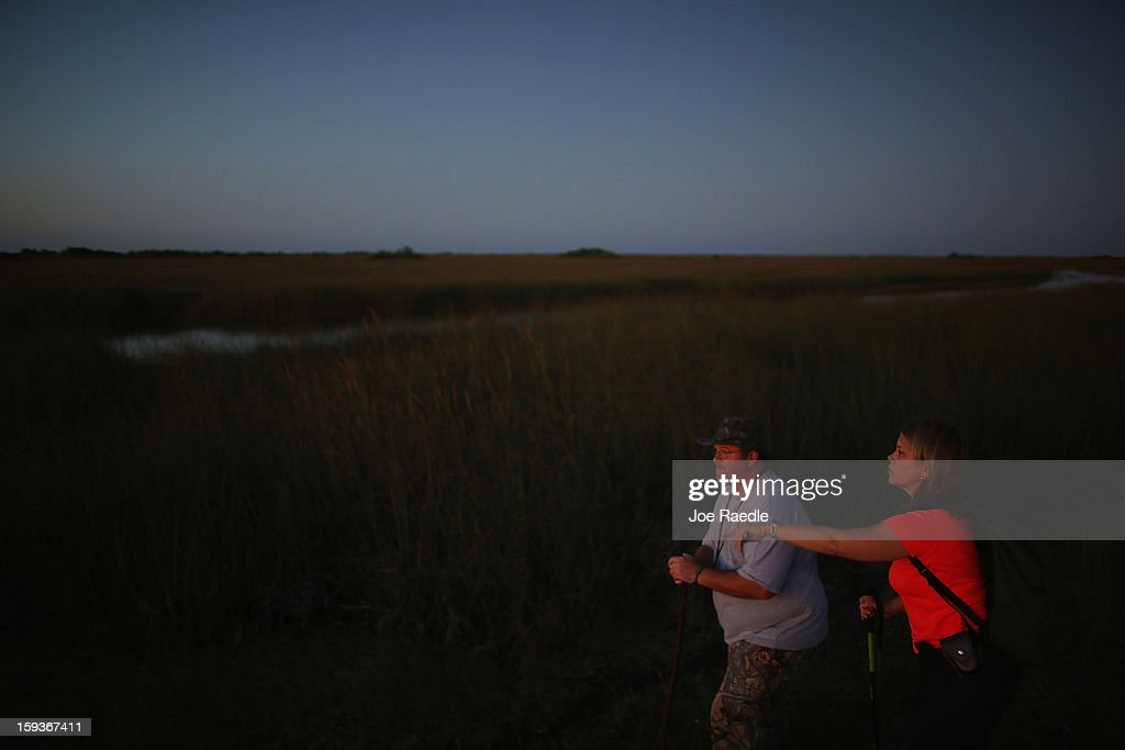 Dan Keenan (L) and Steffani Burd hunt for python's in the Florida Everglades on the first day of the 2013 Python Challenge on January 12, 2013 in Miami, Florida.The Florida Fish and Wildlife Conservation Commission and its partners launched the month long 2013 Python Challenge to harvest Burmese pythons in the Florida Everglades, a species that is not native to Florida.The contest features prizes of $1,000 for catching the longest snake and $1,500 for catching the most.