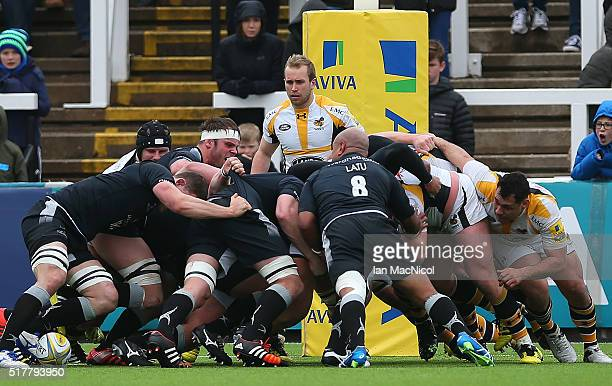 Dan Robson of Wasps looks on during a scrum during the Aviva Premiership match between Newcastle Falcons and Wasps at Kingston Park on March 27 2016...