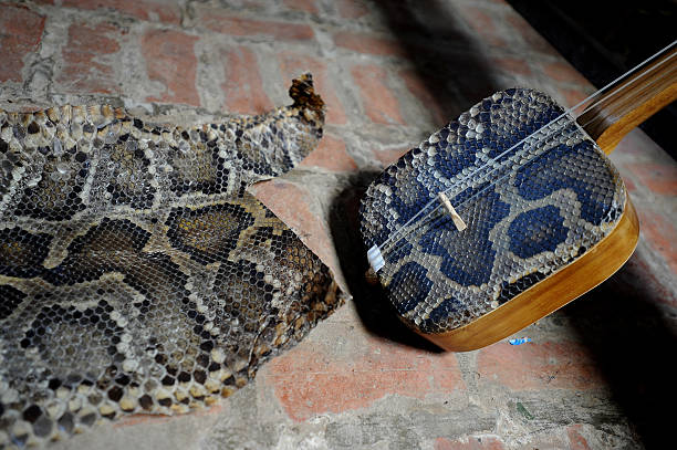 A dan tam and snake skins as raw material are displayed at Bui Van Vuoc workshop in Vinh Bao on September 19 2015 in Hai Phong Vietnam 81yearsold Bui...