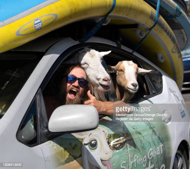 "Dana McGregor arrives in town from Pismo Beach with his surfing goats, Pismo, left, and Grover, in San Clemente on""nThursday, March 18, 2021."