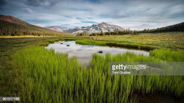 Dana Meadows Pond