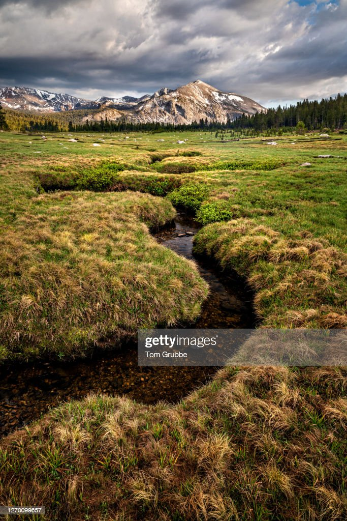 Dana Meadows Summer Peak : Stock Photo