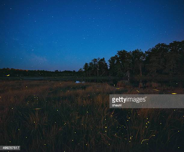 dance of the fireflies - firefly stock pictures, royalty-free photos & images