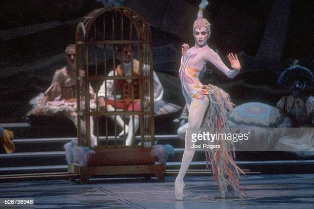 A dancer performs as a bird in the Nutcracker Suite The Pacific Northwest Ballet is well known for its performances featuring sets and costumes by...