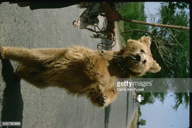 dancing bear - dancing bear photos et images de collection