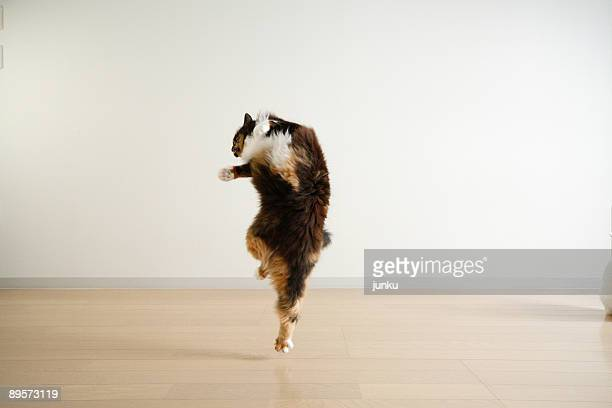 dancing cat - funny cats stock photos and pictures