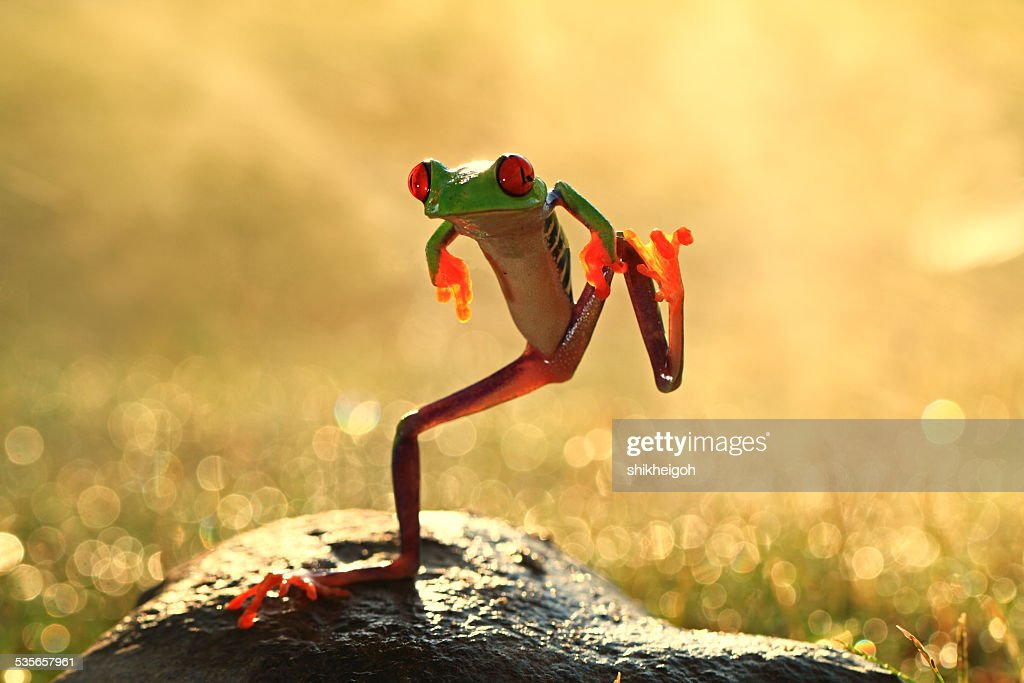 Dancing frog, Batam City, Riau Islands, Indonesia : Stock Photo