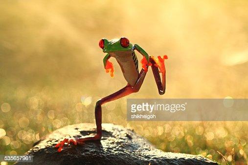 Dancing frog, Batam City, Riau Islands, Indonesia