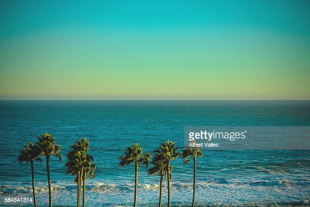 dancing palm trees - malibu stock pictures, royalty-free photos & images