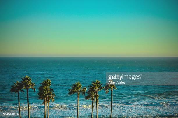 dancing palm trees - malibu foto e immagini stock