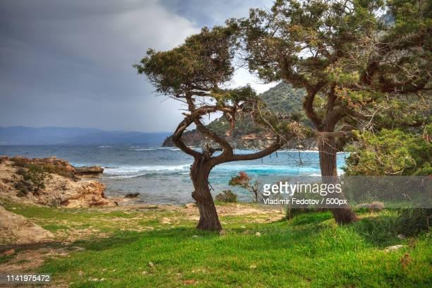 dancing trees - アカマス半島 ストックフォトと画像