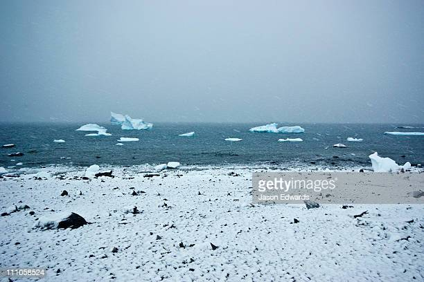 Icebergs float past a bleak snow covered rocky beach during a blizzard