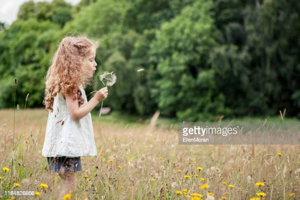 dandelion blow - innocence stock pictures, royalty-free photos & images