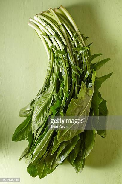 dandelion greens - feuille de pissenlit photos et images de collection