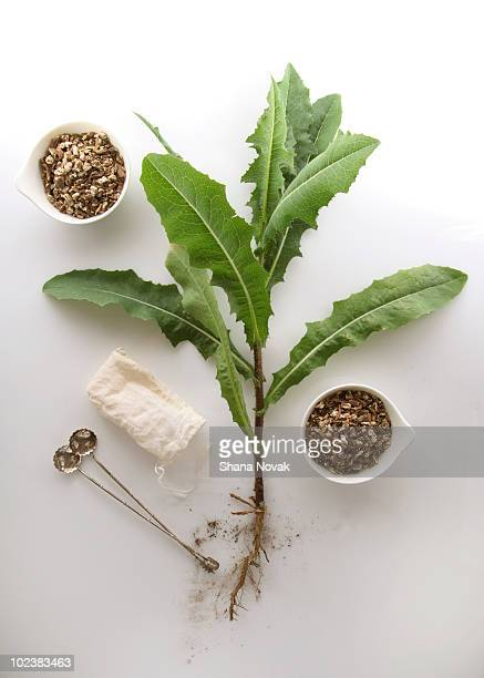 Dandelion Root Tea Preparation