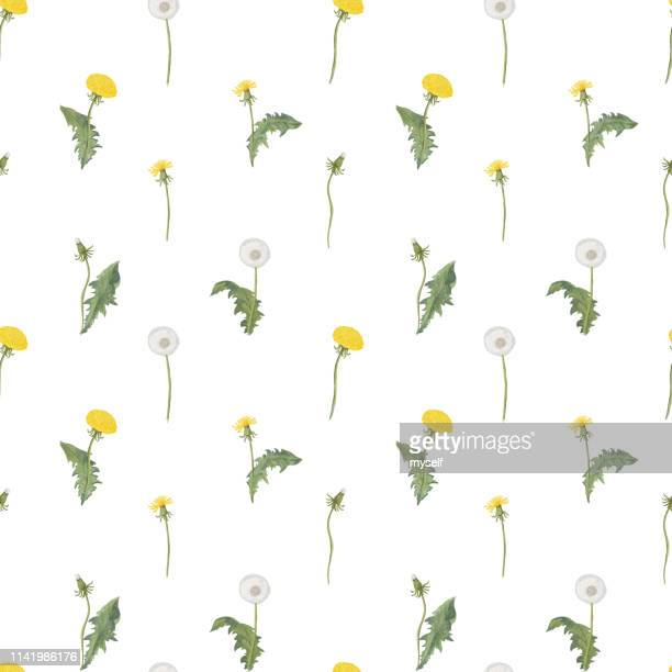 dandelion spring flowers pattern - dandelion leaf stock pictures, royalty-free photos & images