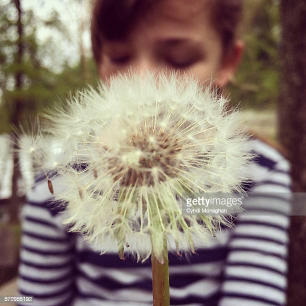 Dandelion Thoughts