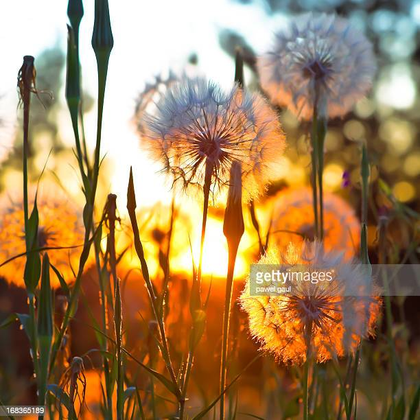 Am Rand auf Wiese bei Sonnenuntergang