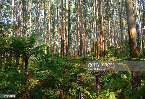 dandenong ranges - dandenong stock photos and pictures