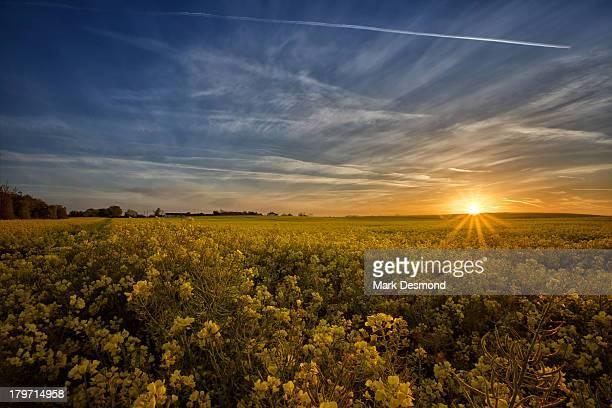 Danesfort Sunrise | Co Kilkenny