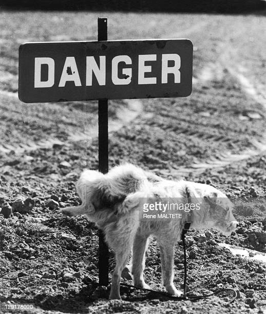 Danger In France Dog peeing against a sign