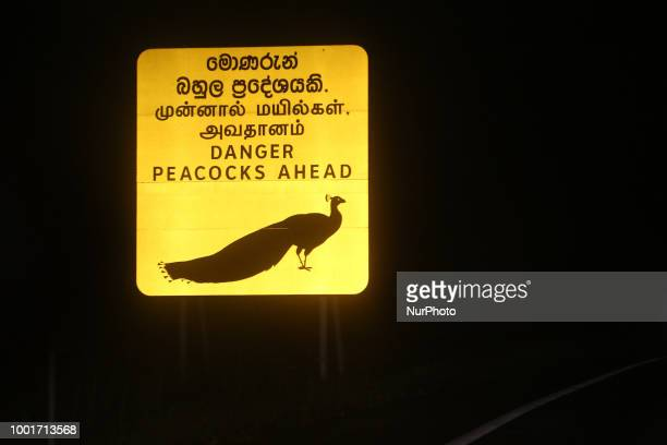 'Danger peacocks ahead' road sign near Colombo Sri Lanka