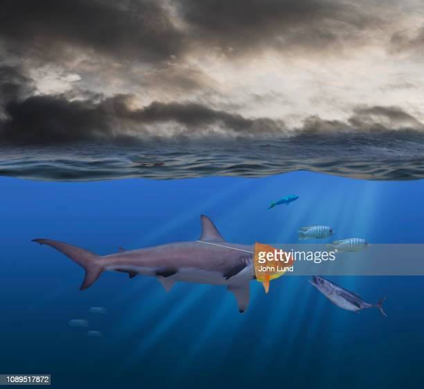 dangerous shark deception - image stock pictures, royalty-free photos & images