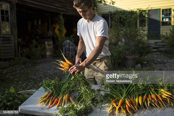 Daniel Morse 27 years washes freshly picked carrots October 5 2012 at the Moon in the Pond farm in Sheffield Massachusetts The farm's autumn...