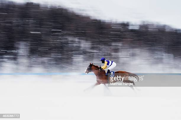 Daniele Porcu riding Arable in action during the GP Guardaval Immobilien Zuoz / Passugger Flat Race of the White Turf St Moritz on February 8 2015 in...