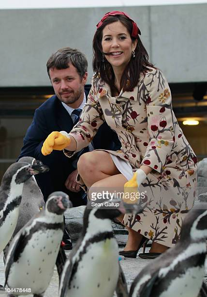 Danish Crown Prince Frederik and Crown Princess Mary who is pregnant with twins feed Humboldt penquins at the Ozeaneum maritime museum and aquarium...