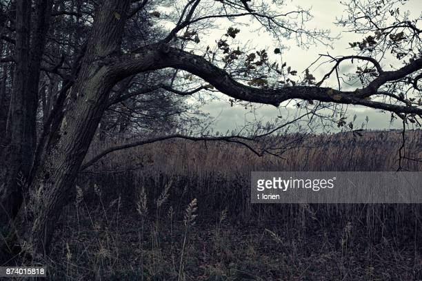 Danish Winter Forest