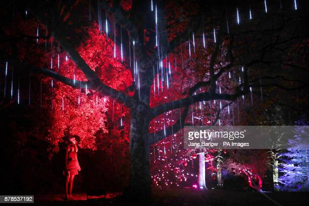 Dannielle McAllister looks at one of a series of light installations that feature in Christmas at the Botanics which is a onemile illuminated trail...