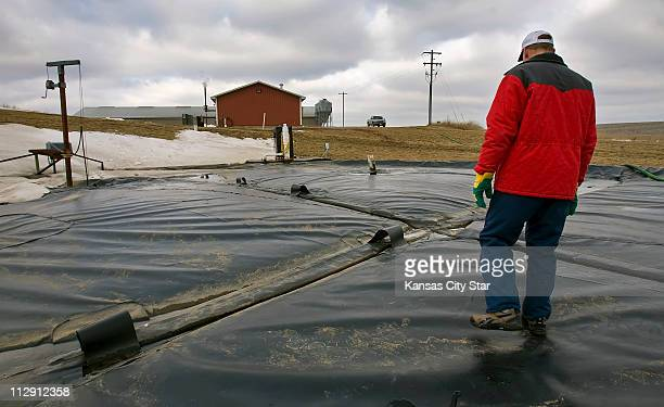 Danny Kluthe, of Dodge, Nebraska, walks across the thick tarp cover of his hog manure digester on his hog farm, where Kluthe captures the manure and...
