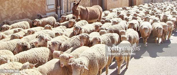 dans mon village en provence - almabtrieb stock-fotos und bilder