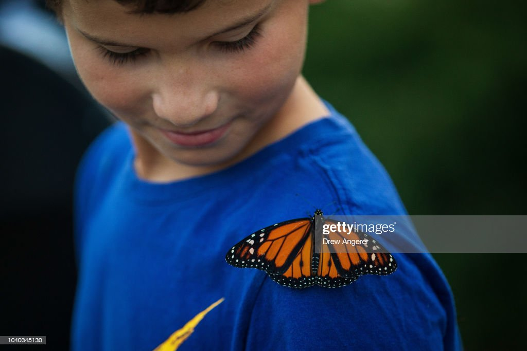 Congressional Pollinator Protection Caucus Releases Monarch Butterflies To Raise Awareness About Their Declining Population