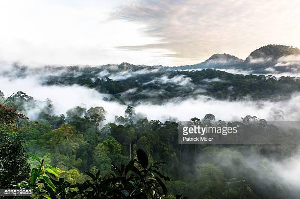Danum Valley Borneo Rainforest Canopy