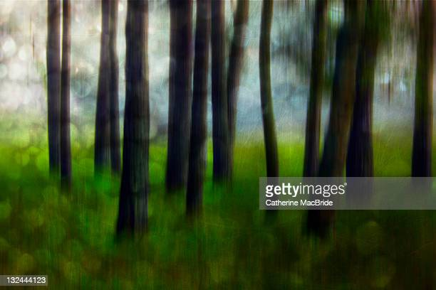 dappled light in forest - catherine macbride stockfoto's en -beelden