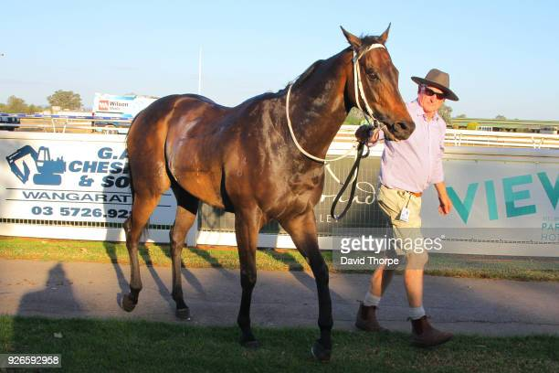 Darci's Money in the mounting yard after winning the Financial Momentum 0 58 Handicap on March 03 2018 in Wangaratta Australia