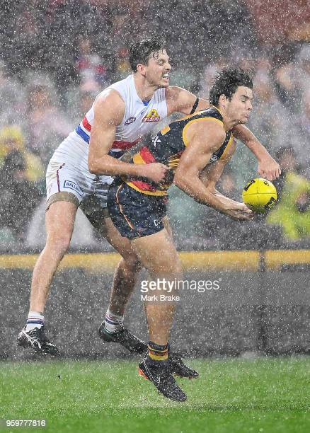 Darcy Fogarty of the Adelaide Crows competes for the ball against Zaine Cordy of the Bulldogs during the round nine AFL match between the Adelaide...