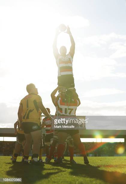 Darcy Swain of the Vikings wins a lineout during the round three NRC match between Canberra Vikings and Western Force at Viking Park on September 16...