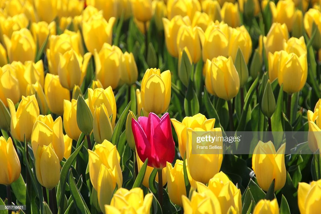 Dare to stand out : Stockfoto