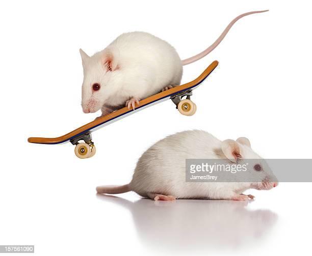 Daredevil Adrenaline Junky White Mice; Extreme Skateboard Jumping Stunt Mouse