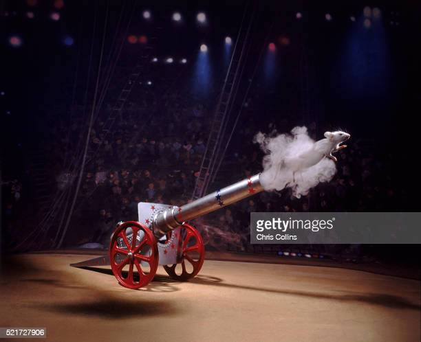 daredevil mouse - cannon stock pictures, royalty-free photos & images