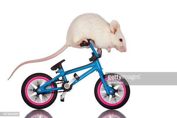 daredevil white mouse doing tricks, stunt riding on bicycle handlebars - stunt stockfoto's en -beelden